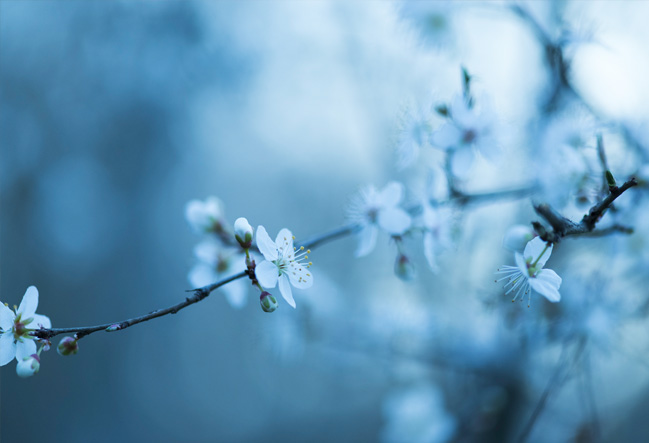 teuleria_linyola_foto_primavera_javier_pardina_2